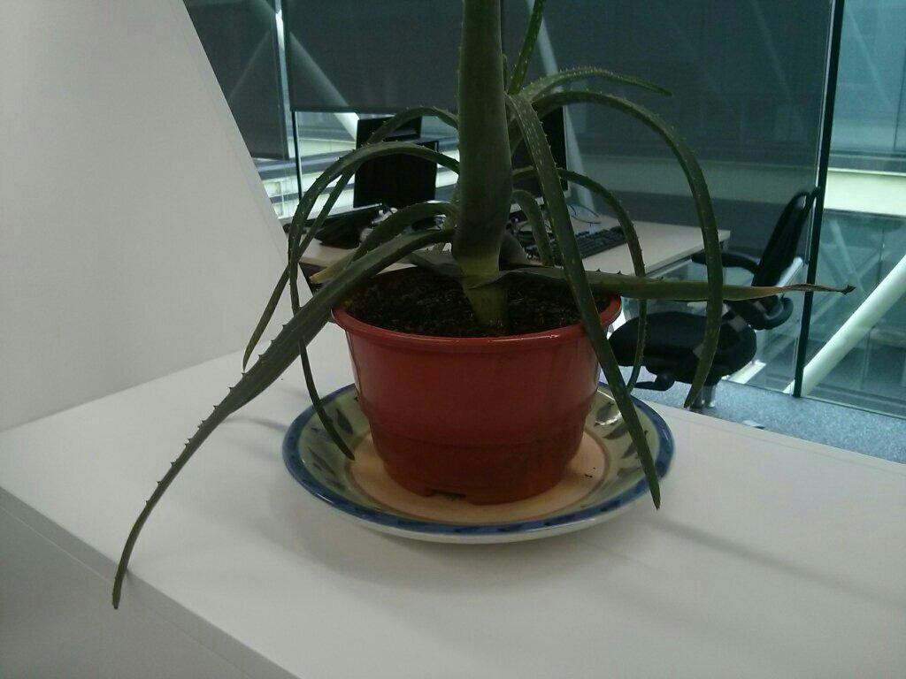 Foto de una planta. Toda la imagen está enfocada, con lo que se resta importancia a la planta, que se pierde en un fondo complejo